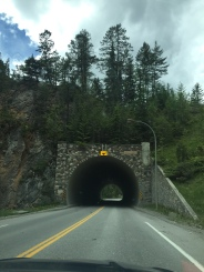 Wildlife Road Crosssings, Kootenay National Park